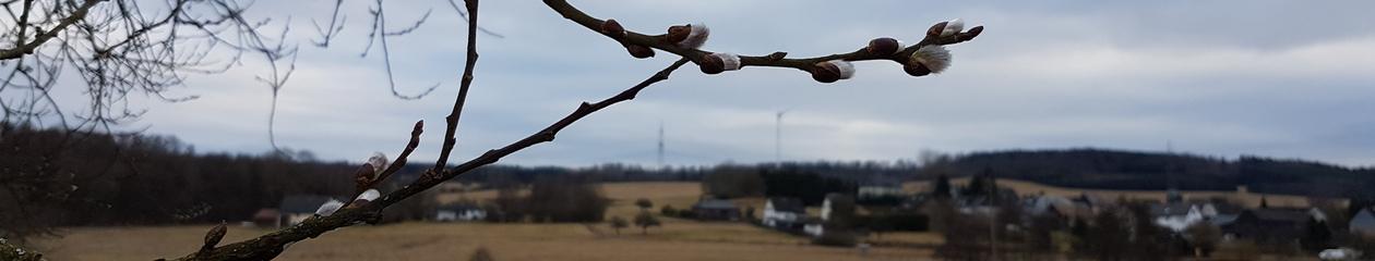 Frühlingssuche